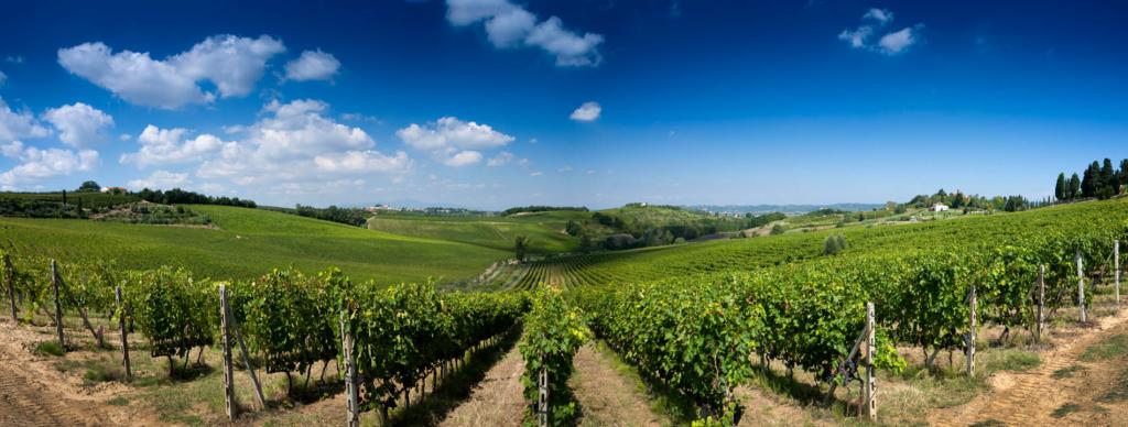 La Spinetta, vingård, Casanova