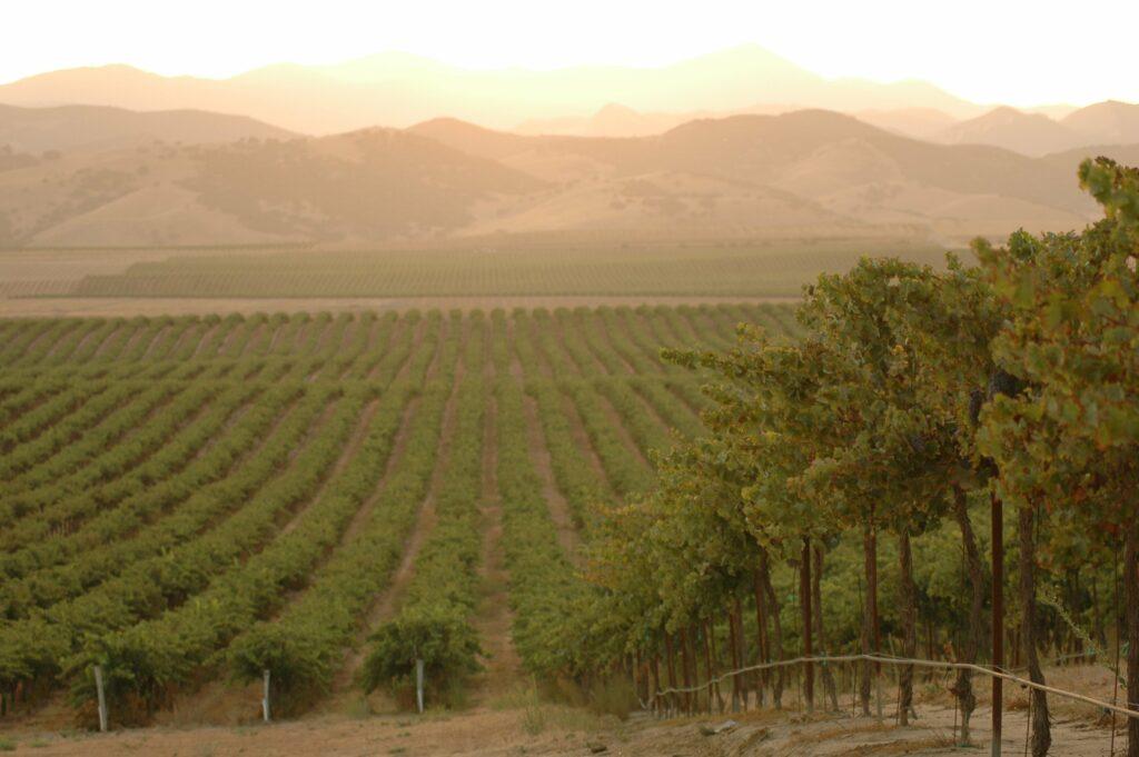 Delicato Family Vineyards, vy över vingård, Napa Valley, Kalifornien, USA